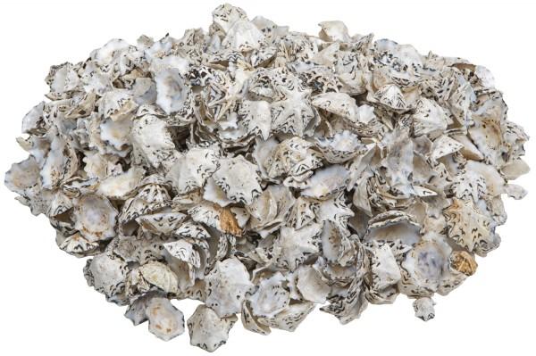 Kleine Austernmuscheln